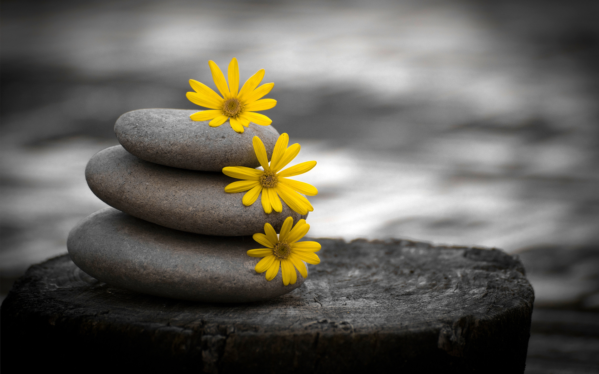 stones-and-flowers-artistic-wallpaper-1920x1200-963